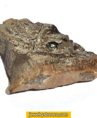 فسیل،فسیل برگ،09025283869،فسیل گیاهی،فسیل زیبا،فسیل برگ زیبا،خواص درمانی فسیل،فسیل سنگ،خواص فسیل ،فروشگاه جواهرات،نحوه تراش دادن،سختی فسیل سنگ ،سختی فسیل سنگ چند است، فسیل چند رنگ دارد،چگونگی تشکیل فسیل ،معادن فسیل ،سنگ های قیمتی،سنگ جواهرات،جستجوی سنگ های قیمتی،عکس سنگ های قیمتی،چگالی فسیل ،قیمت سنگ های قیمتی،قیمت فسیل طبیعی،فروشگاه اینترنتی جواهرات